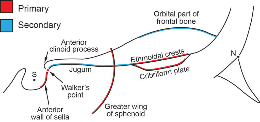 Anterior Cranial Base Fundamentals Orthodontic Products 2 bony surfaces connect as a peg in hole. anterior cranial base fundamentals